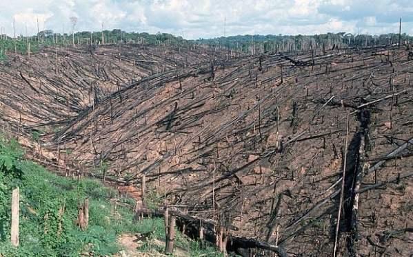 deforestation_3277528b